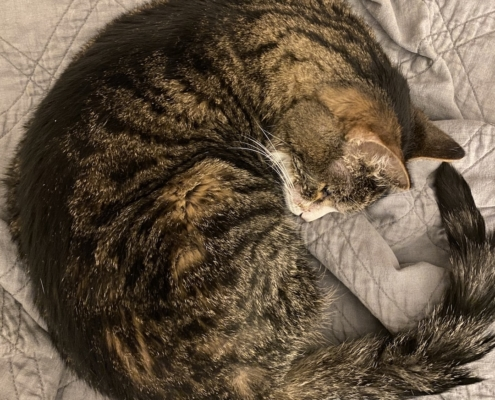 Cat lymphoma sleeping caregiver