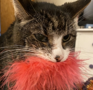 Cat lymphoma caregiving boa